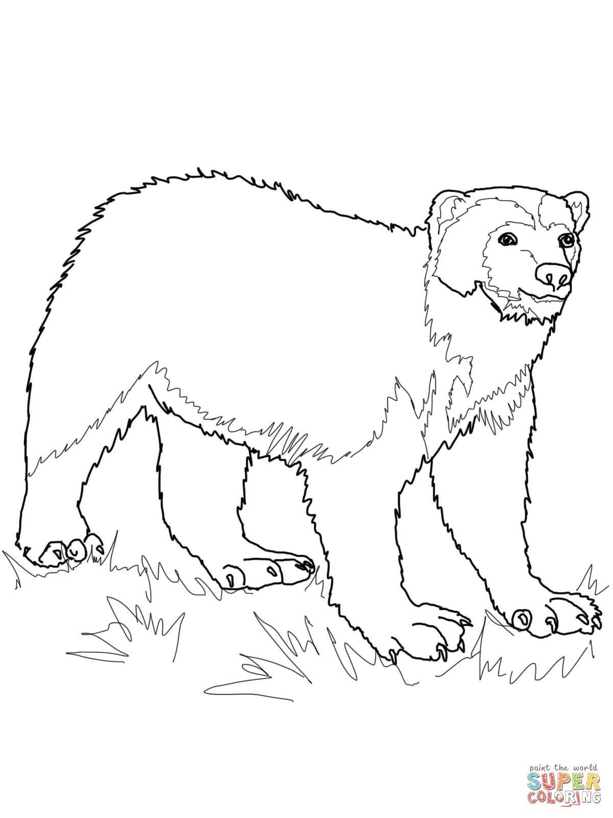 Wolverine Animal Coloring Pages With Images Animal Coloring