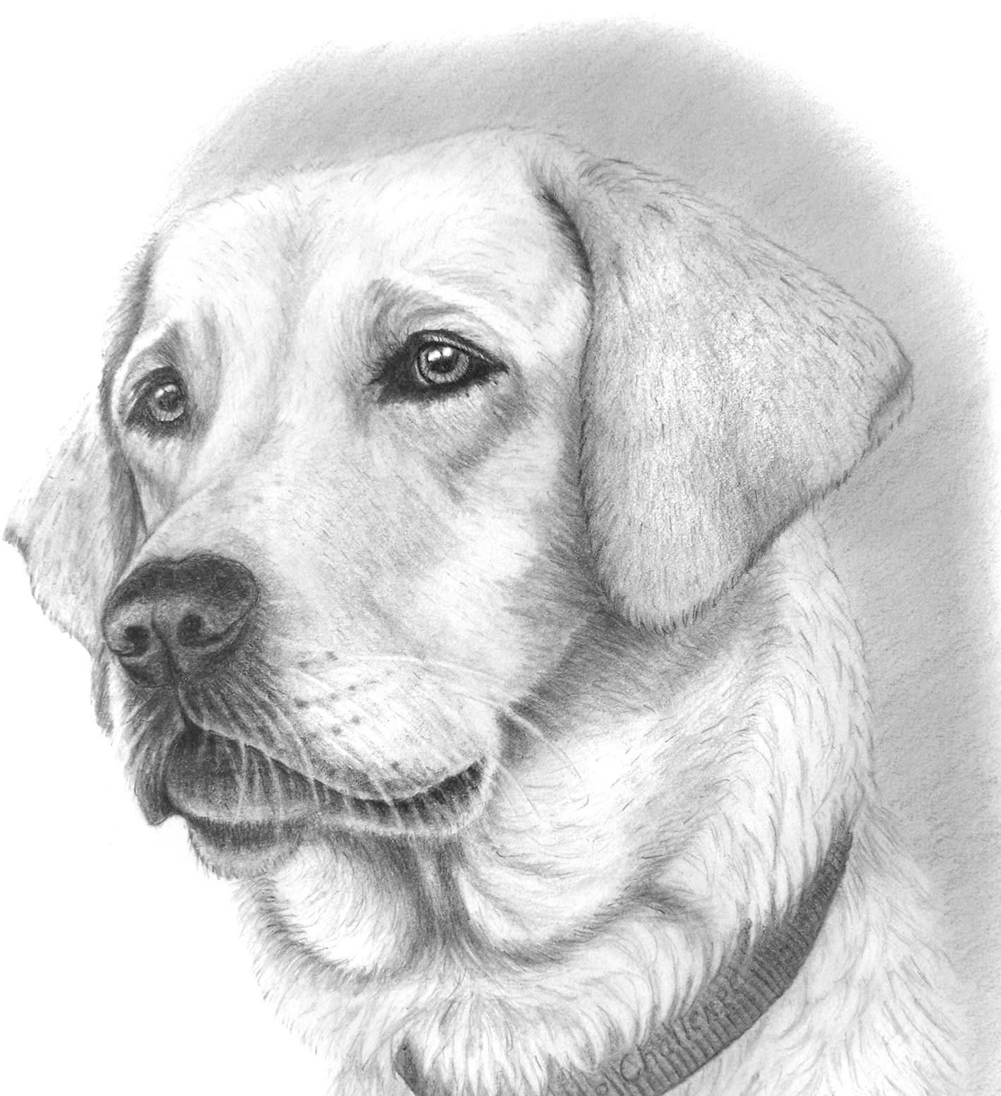 Thetrueh I Will Draw A Lovely Pet Portrait For 10 On Fiverr Com Dog Pencil Drawing Dog Face Drawing Dog Drawing Tutorial [ 1551 x 1417 Pixel ]