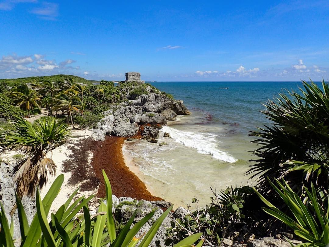 The Sargassum Invasion Takes Over The Beach Of The Tulum Ruins The Only Mayan City Built On The Coast The Stunning Cliffs Tulum Ruins Tulum Beach Mayan Cities