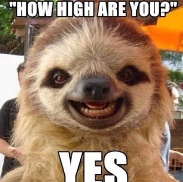 How High Are You Yes Animals Fun Meme Sloth High