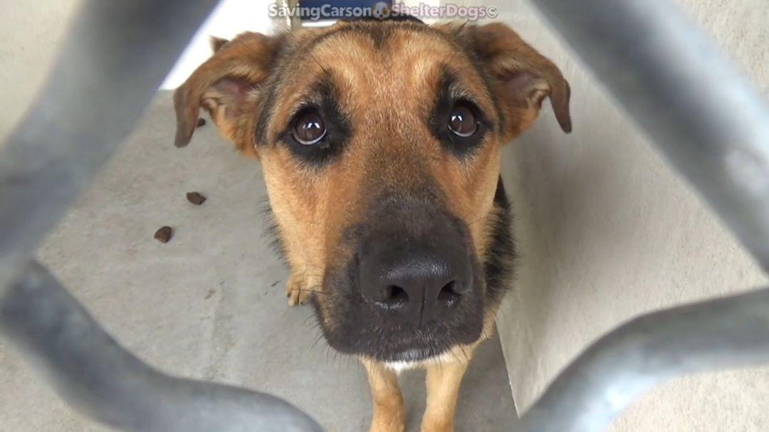 "Saving Carson Shelter Dogs on Instagram ""💜 ️SASHA ️ID"