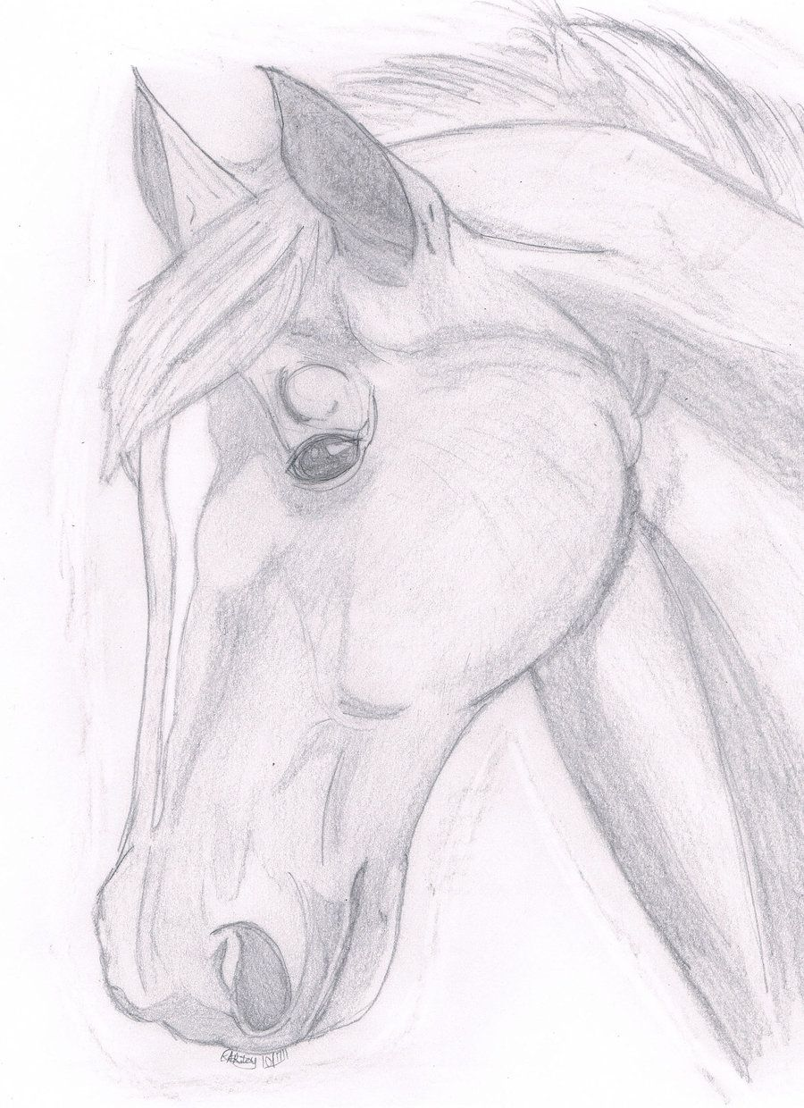 Unicorn head by lapis lazuri on deviantart easy horse drawing horse head drawing
