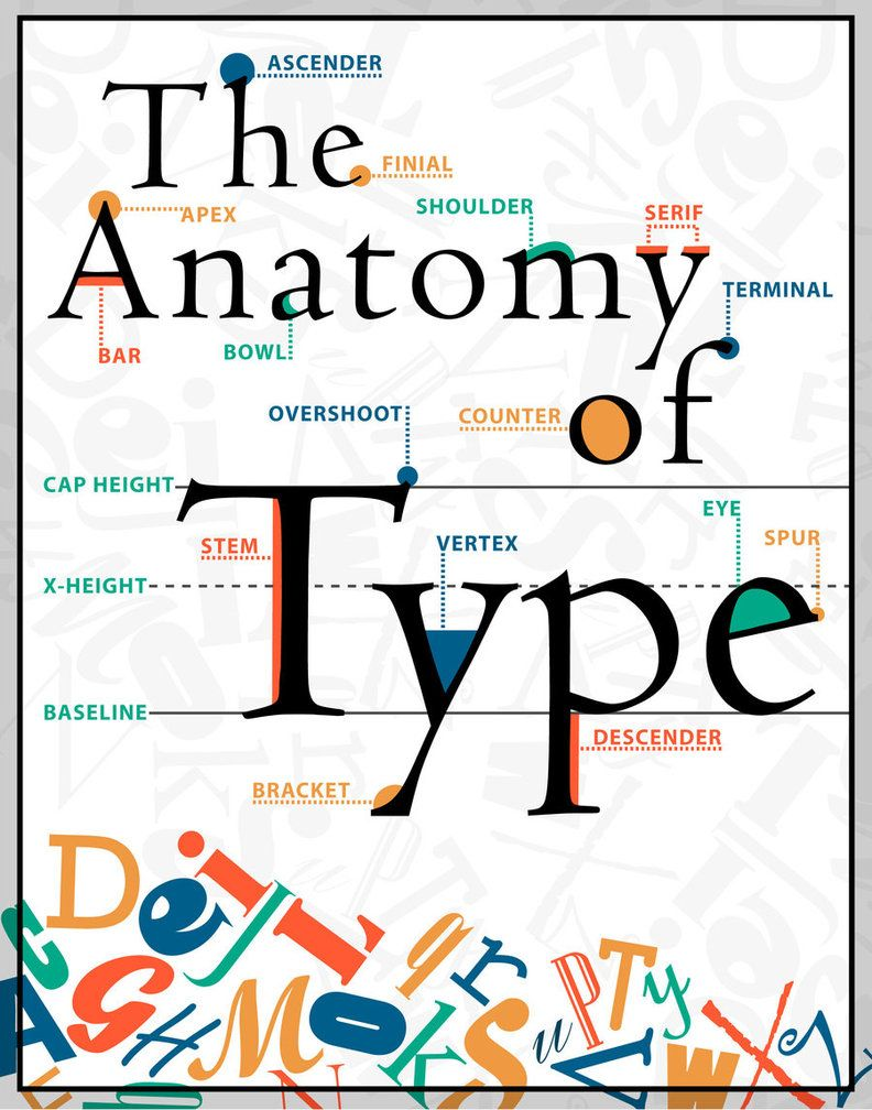 The Anatomy of Type poster by Maureen Stewart at designstew: for ...