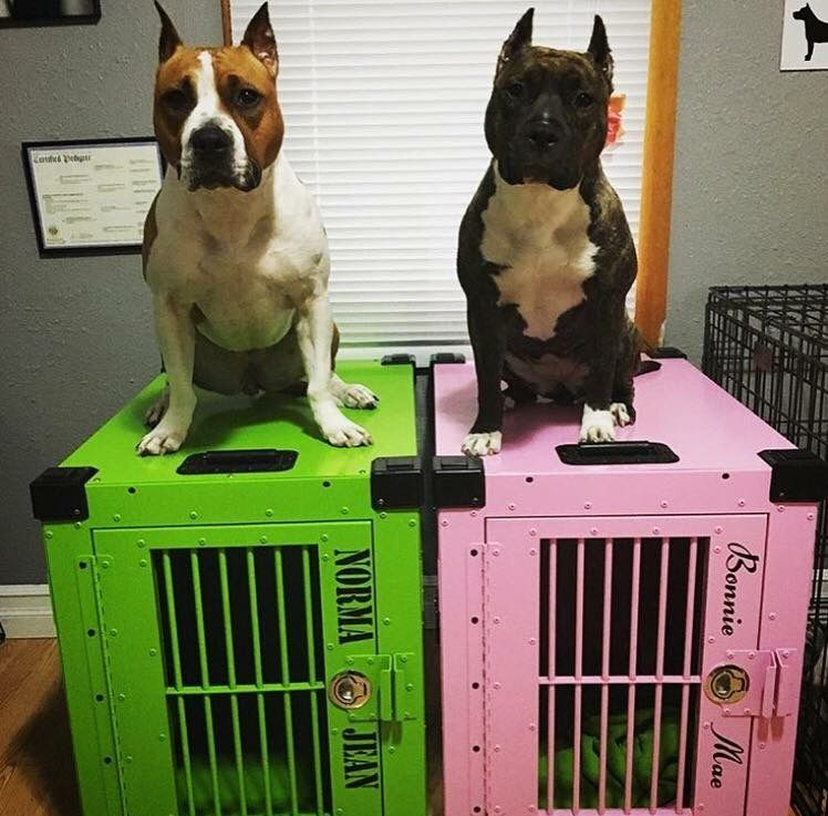 Pin By Impact Dog Crates On Pickels In 2020 Custom Dog Crate