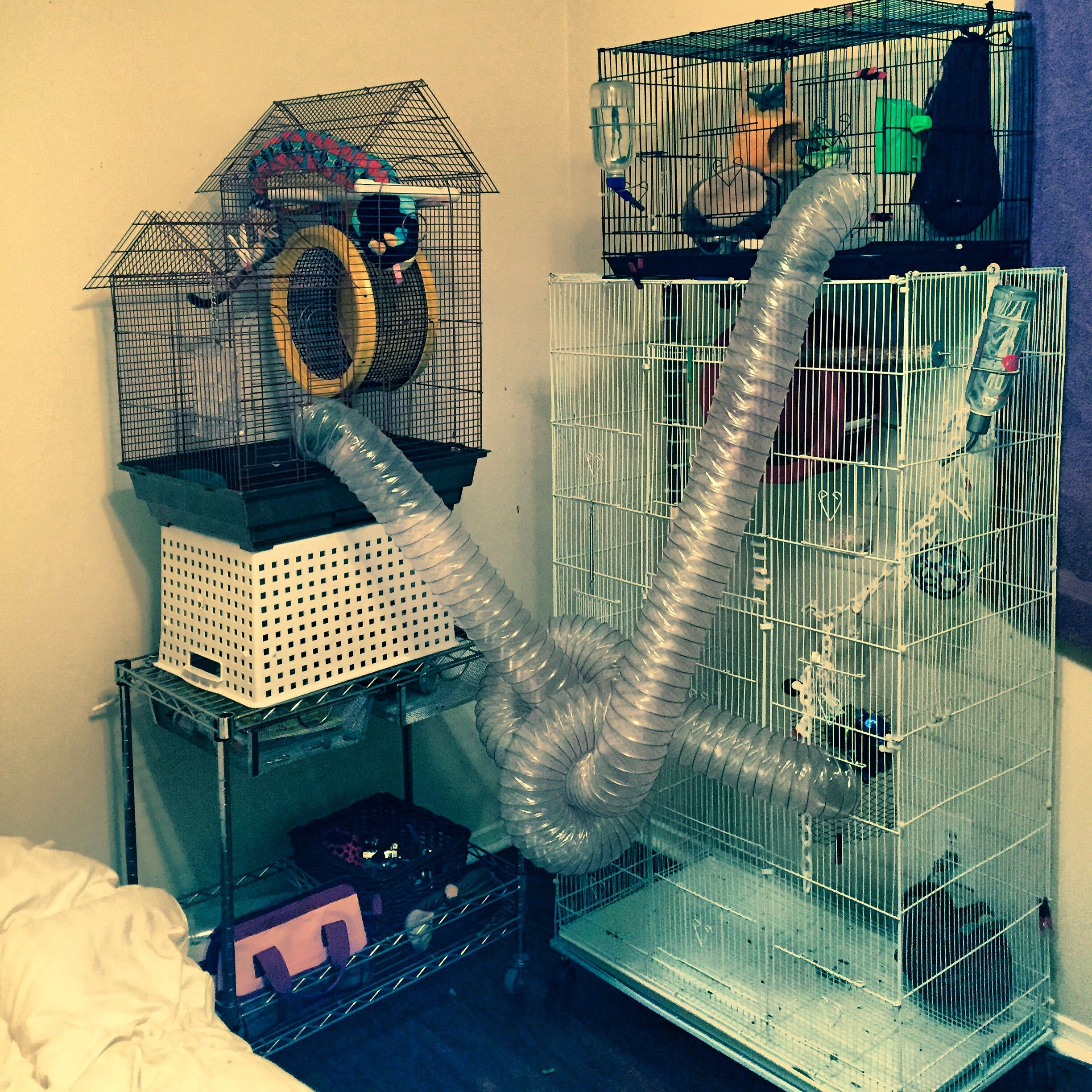New Sugar Glider Cage Setup I Try To Change The Tunnels Around