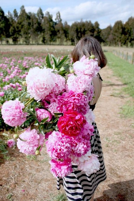 We can't get enough of them - peonies
