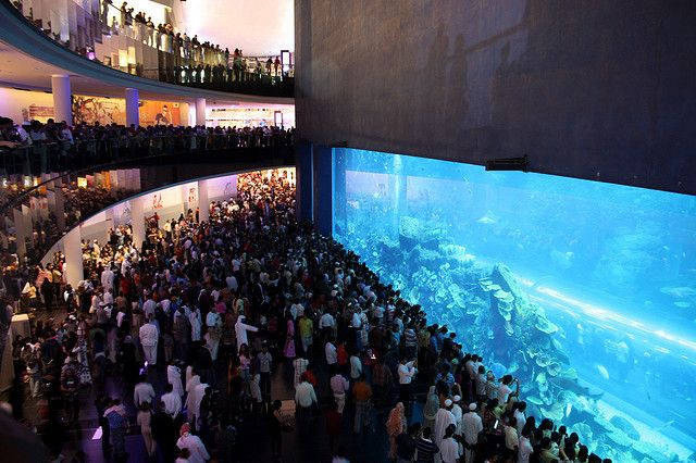 10 Largest Aquariums in the World | Aquarium, Dubai ...