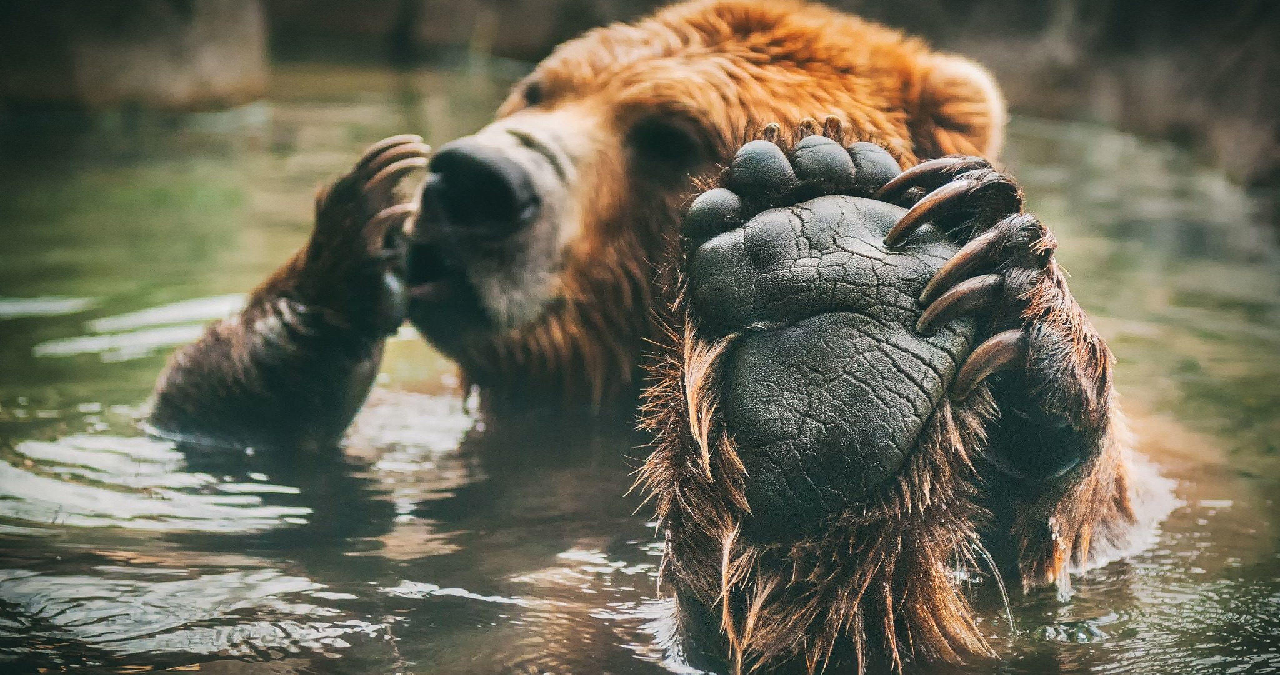brown bear 4k ultra hd wallpaper ololoshenka Pinterest