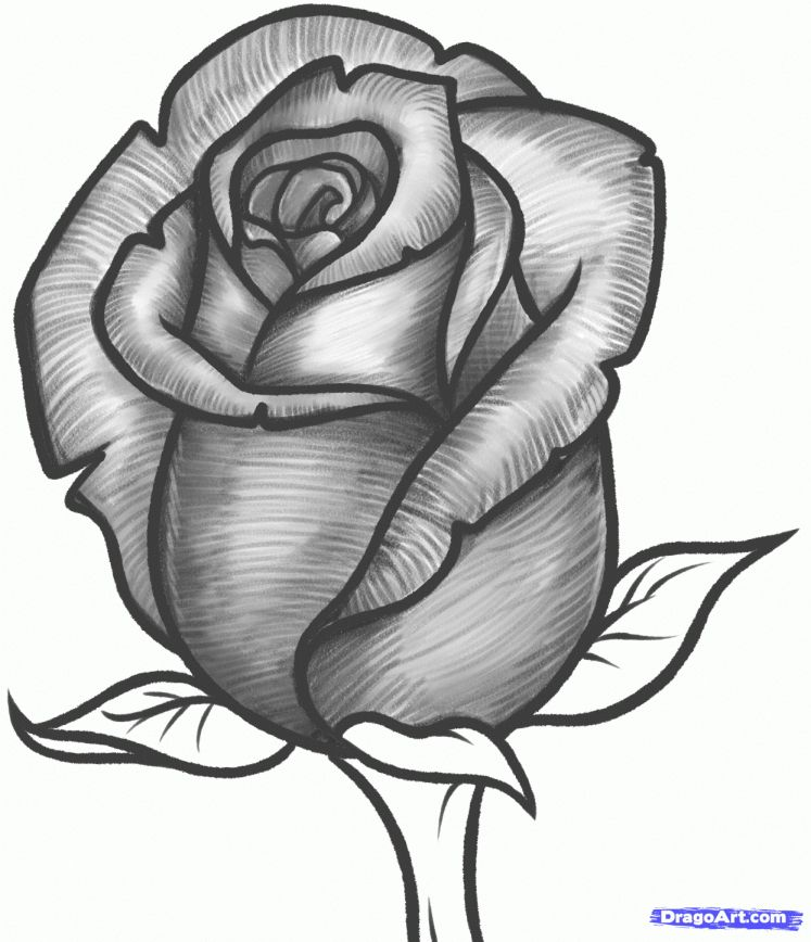 17 Rose Flower Drawing Images Flower Drawing Drawingpencilwiki Com Di 2020 Lukisan Bunga Sketsa Lukisan