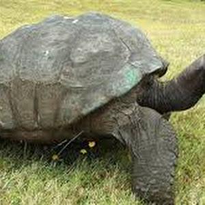 تفسير رؤية حلم السلحفاة في المنام للعصيمي Turtle