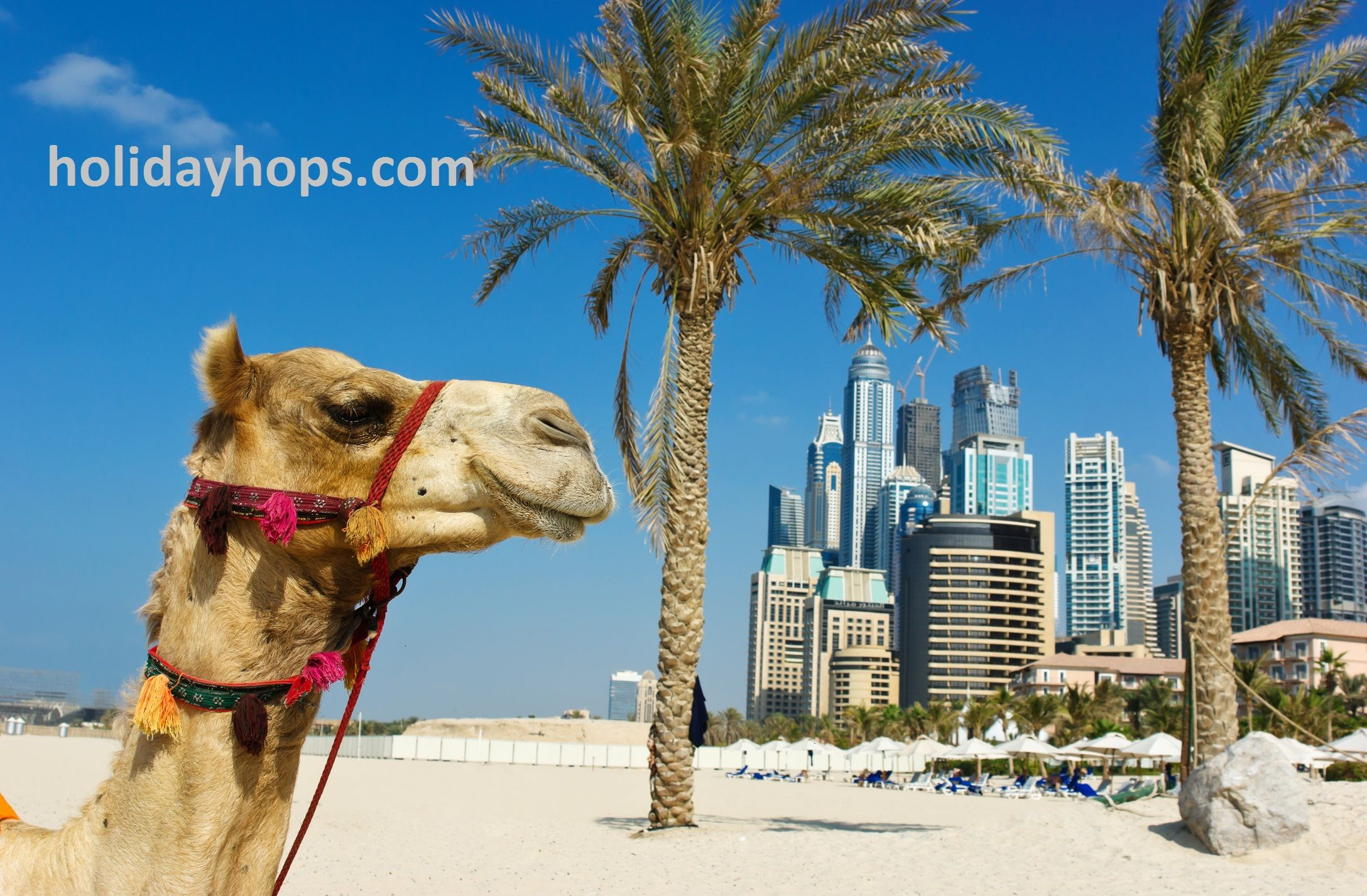 #Dubai is perfect location for families, couples and party animals.  #Holidayhops provides you best #Dubai #Travel #Package.