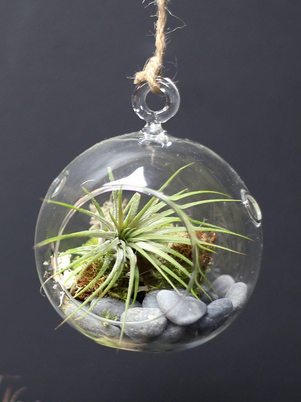Hanging Orb Terrarium Kit Gardener's Supply Terrarium