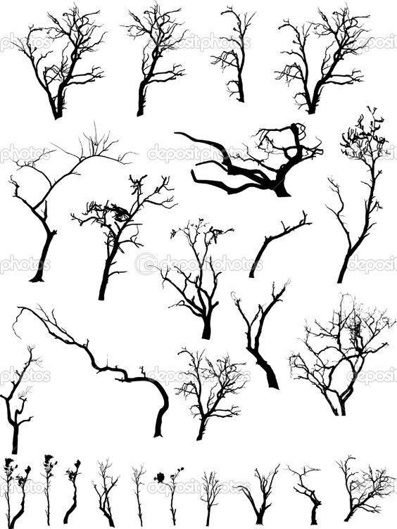 Soorten Takken Branch Drawing Tree Drawing Tree Silhouette