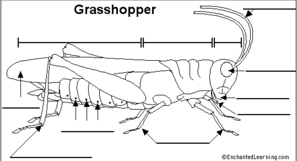 Labelling Grasshopper Anatomy School Fun Animal Science Lannister Lion