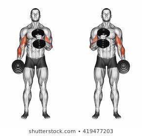 Cross Body Hammer Curls 3d Illustration Stockillustration 419477203