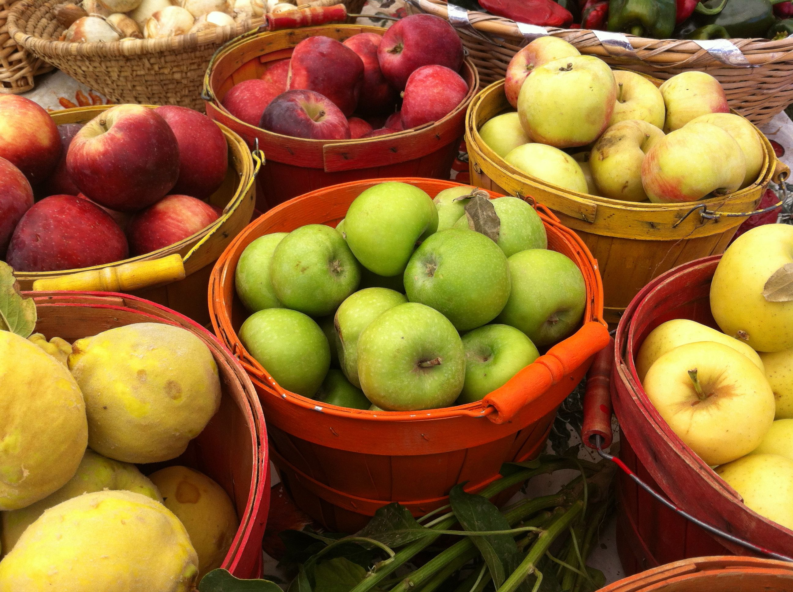 Fall Apple Harvest » PaleoQuerque