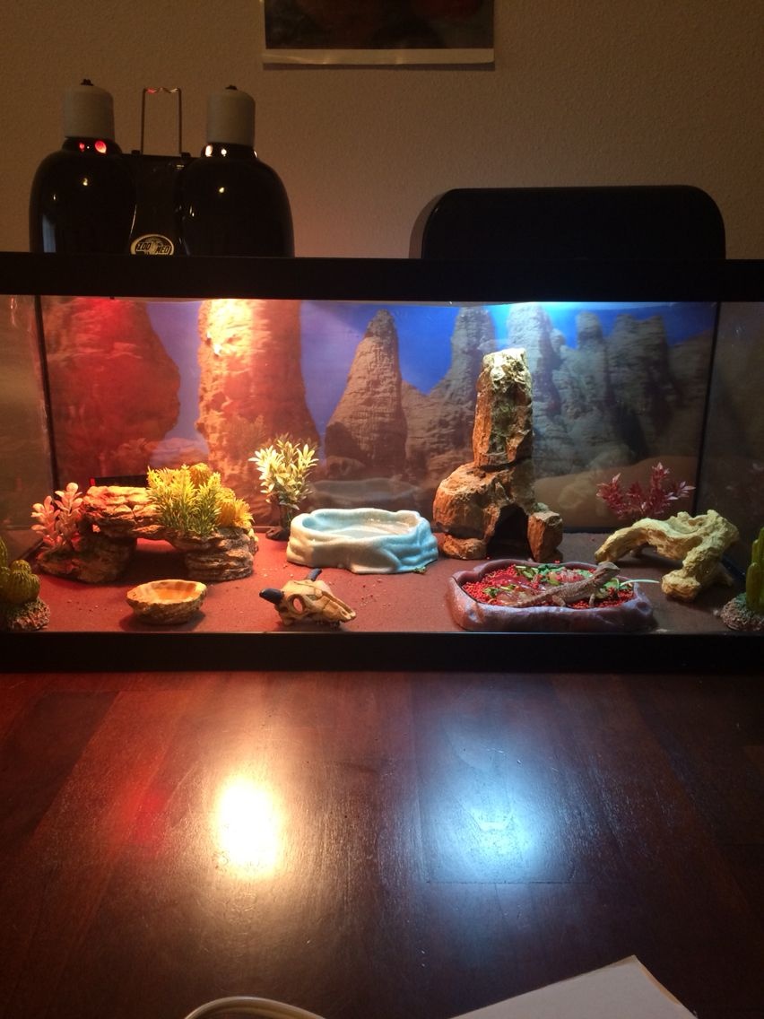bearded dragon habitat reptiles pinterest bartagame terrarium ideen und tiere. Black Bedroom Furniture Sets. Home Design Ideas