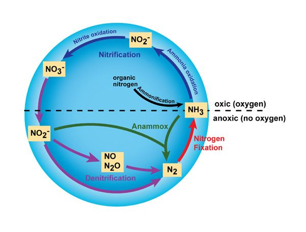 Major Transformations In The Nitrogen Cycle Nitrogen Cycle