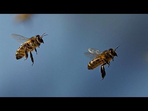 What S The Waggle Dance And Why Do Honeybees Do It Ferramentas