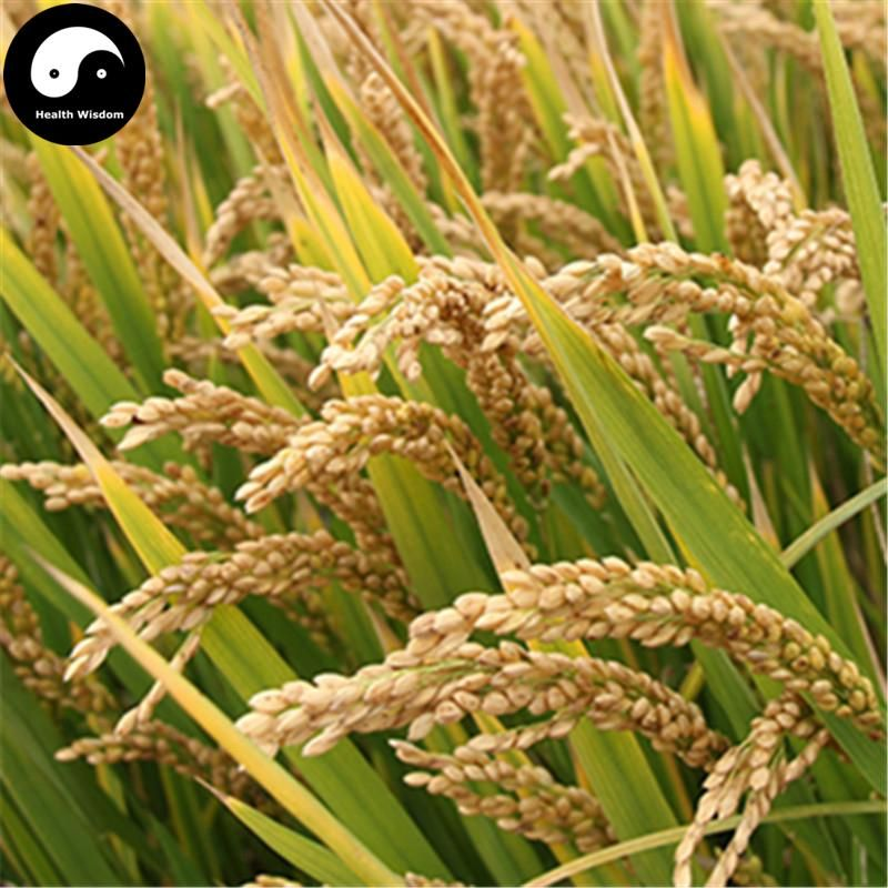 Buy Yellow Fragrant Rice Seeds 600pcs Plant Grain Oryza Sativa For