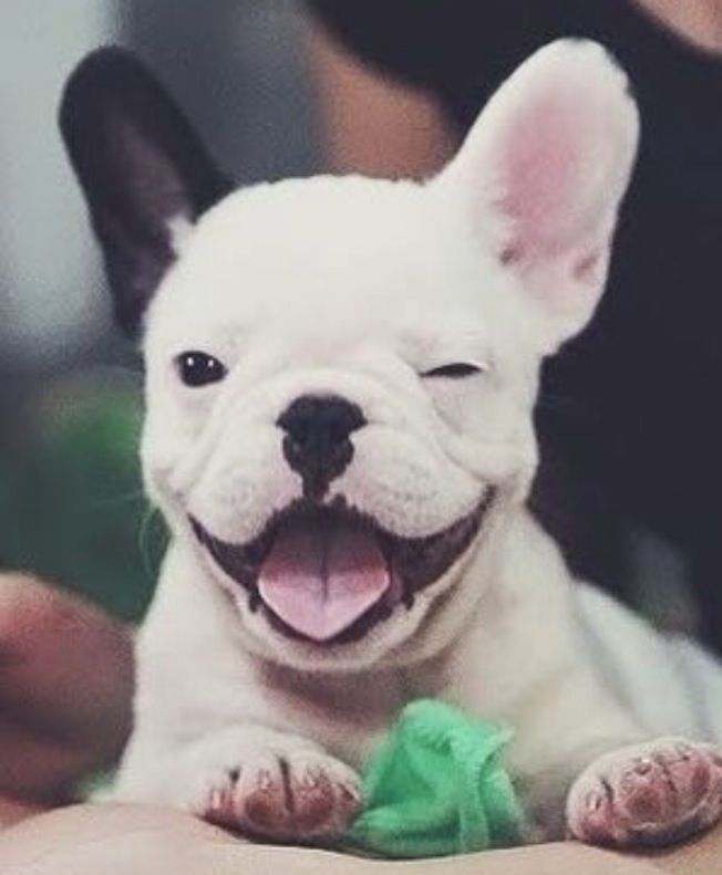 35 Cats And Other Cute Animals Winking Cute Animals Bulldog