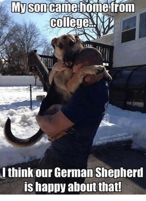 Image Result For Funny German Shepherd Memes Joans Dog