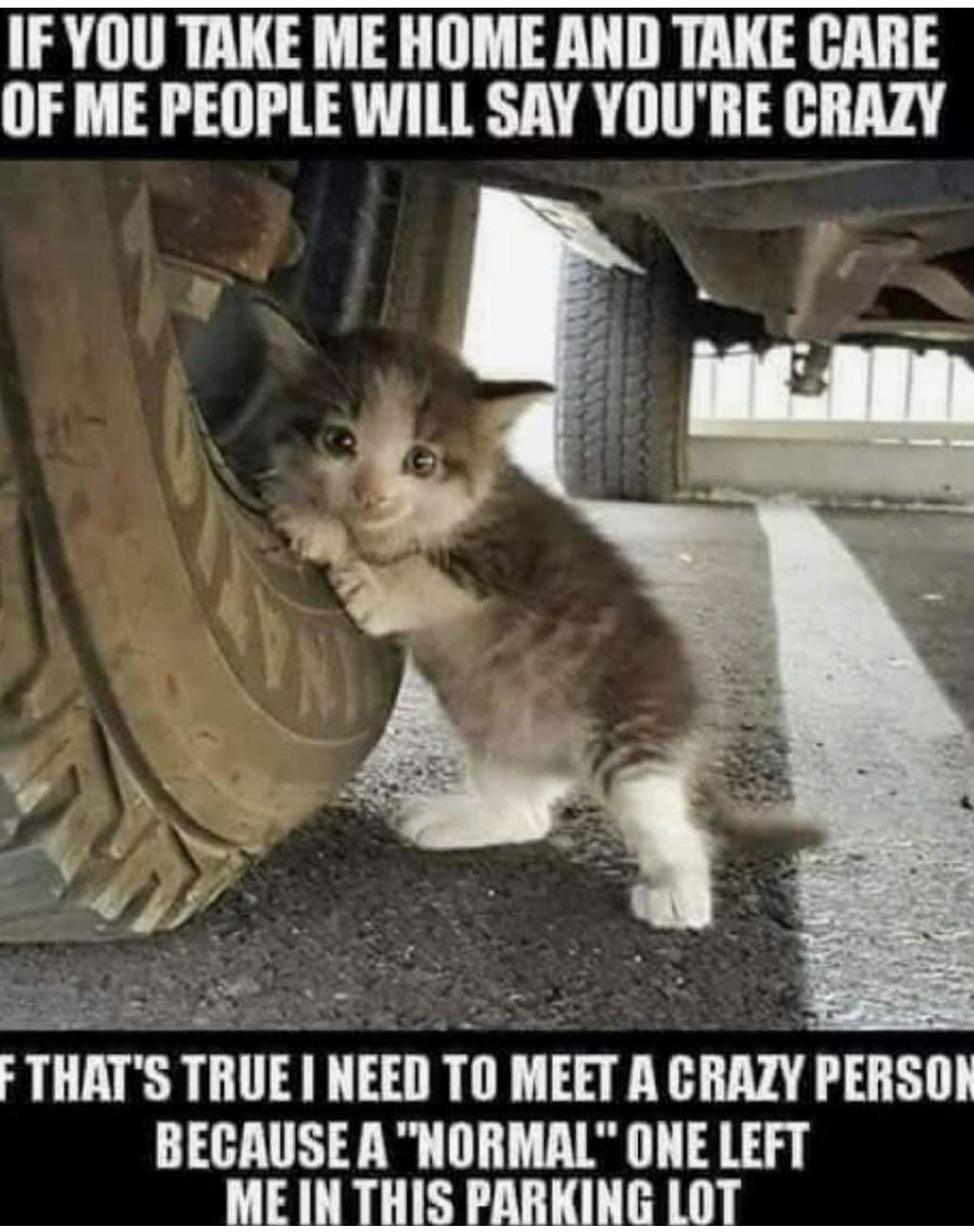 Pin by Liz Cecchini on A Cat's Love Cute animal pictures