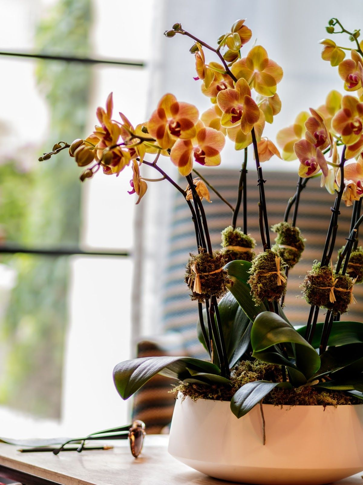 Introducing Ginny's Orchids Orchids, Orchid care, Flowers