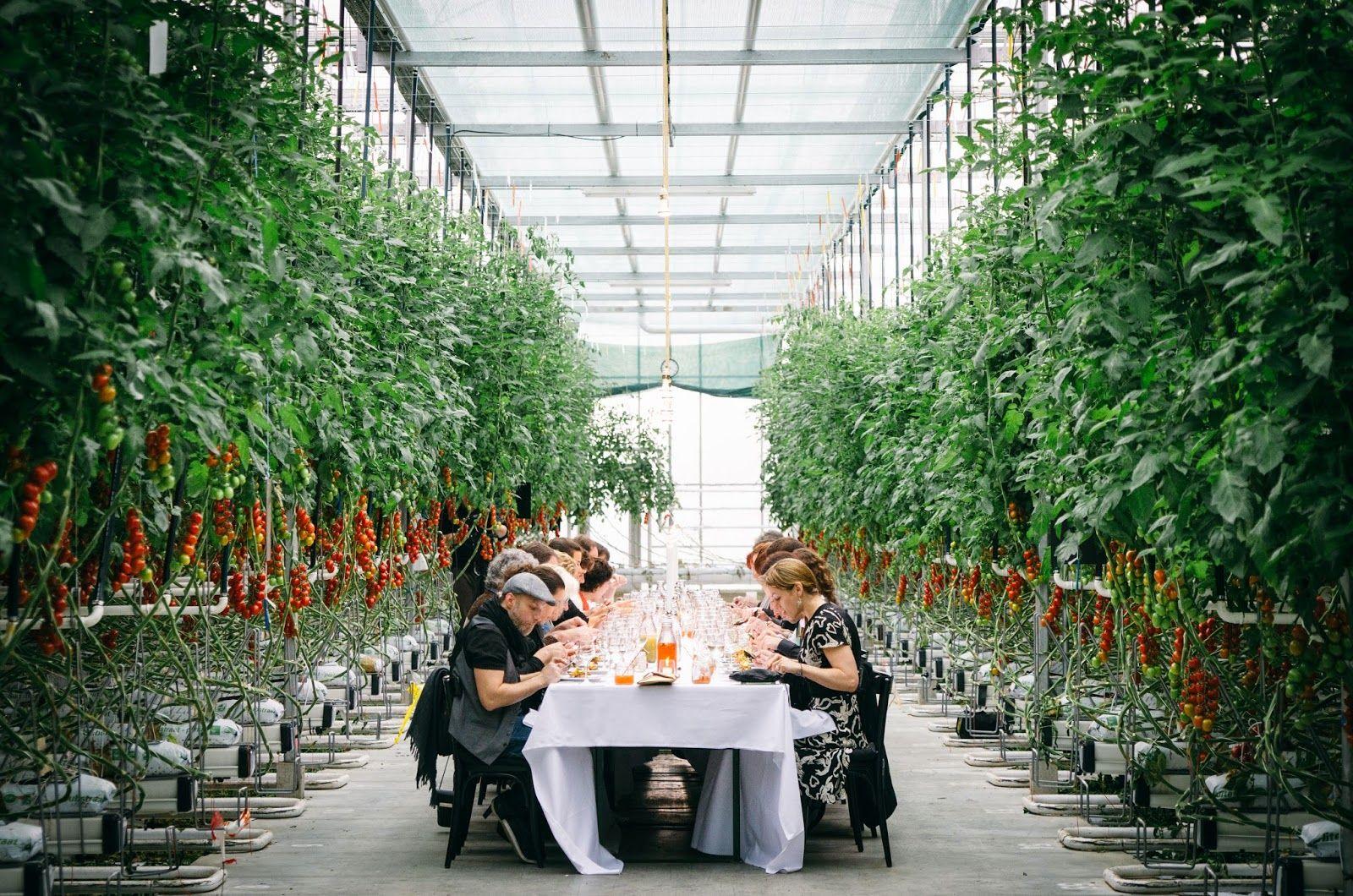 Gastfreunde: Zu Gast in einem Gewächshaus | Garten: Im Gewächshaus ...