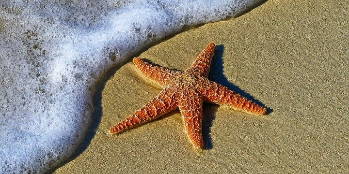 Starfish Beach, Panama