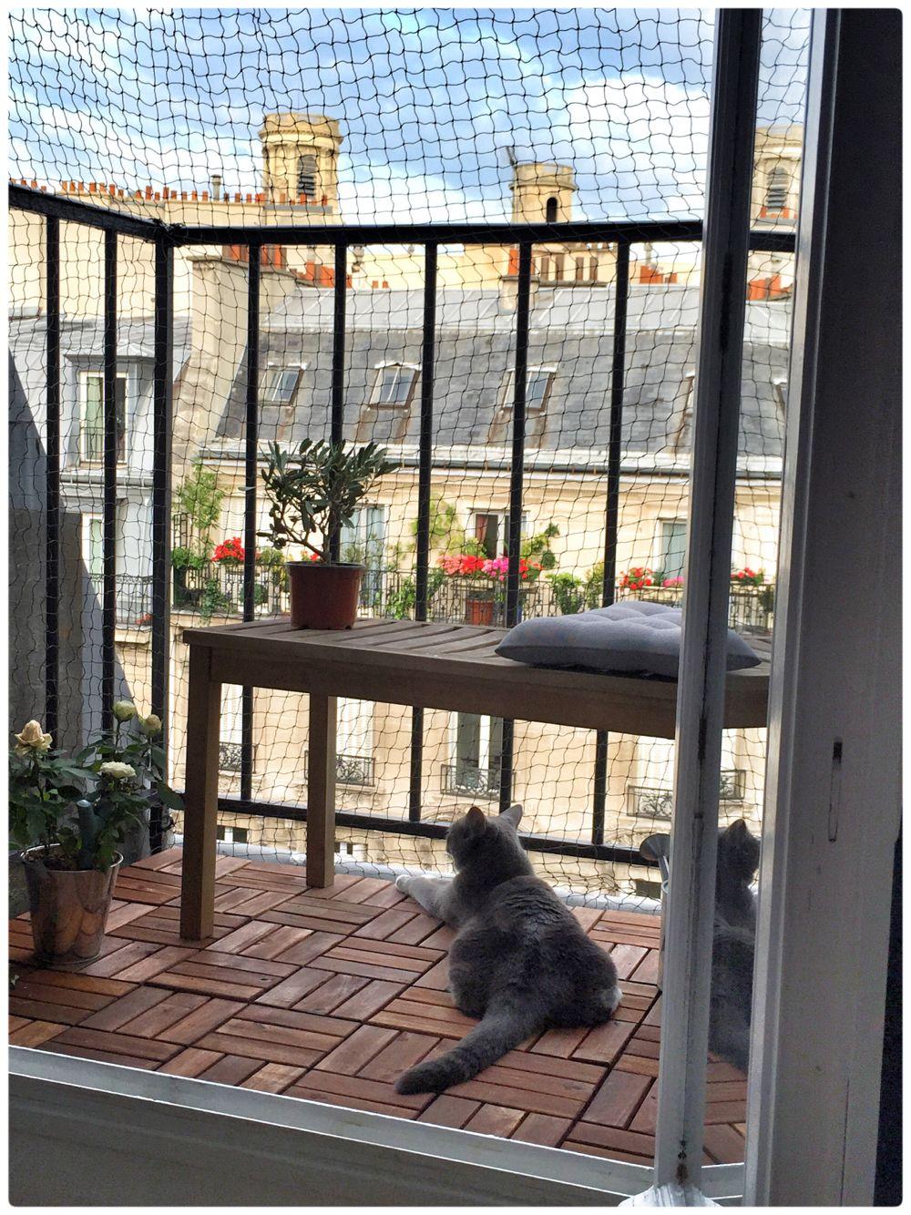Paris Balcony Catio Cat Apartment