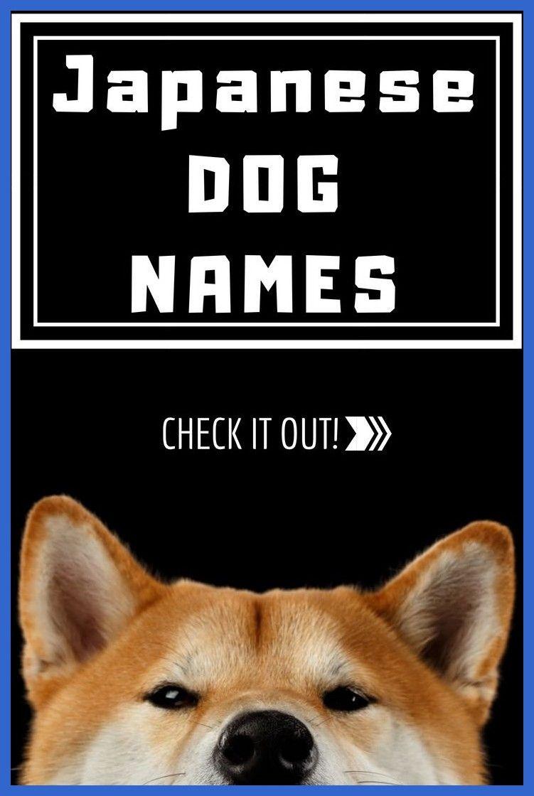 Para Ayudarlo En Su Busqueda Hemos Compilado Un Um Ihnen Bei Ihrer Suche Zu Helfen Haben Wir Zusammengestellt Dog Names Japanese Dogs Cute Names For Dogs