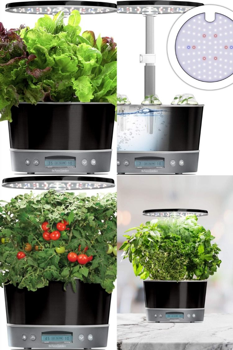 Aero Garden Harvest Elite 360 Platinum In 2020 Aerogarden Garden Harvest Herbs Indoors