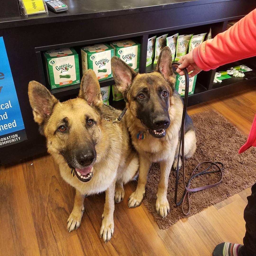 Cutecustomeralert This Dynamicdogduo Shops At Pet Valu Englewood Oh Pet Valu Pets Cute Instagram Posts