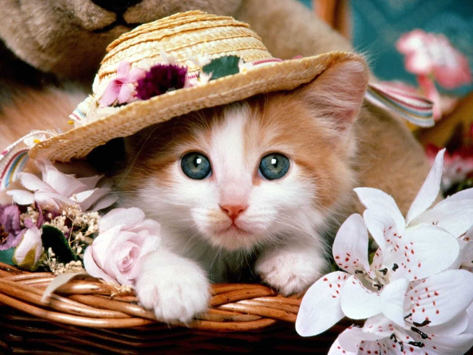 Nothing found for Download Cute cat wallpaper, Cute