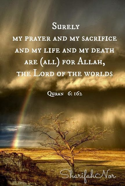 quotes from the quran about life