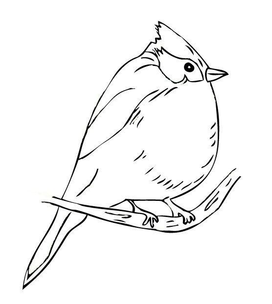 Tufted Titmouse Bird Sketch Bird Art Watercolor Bird