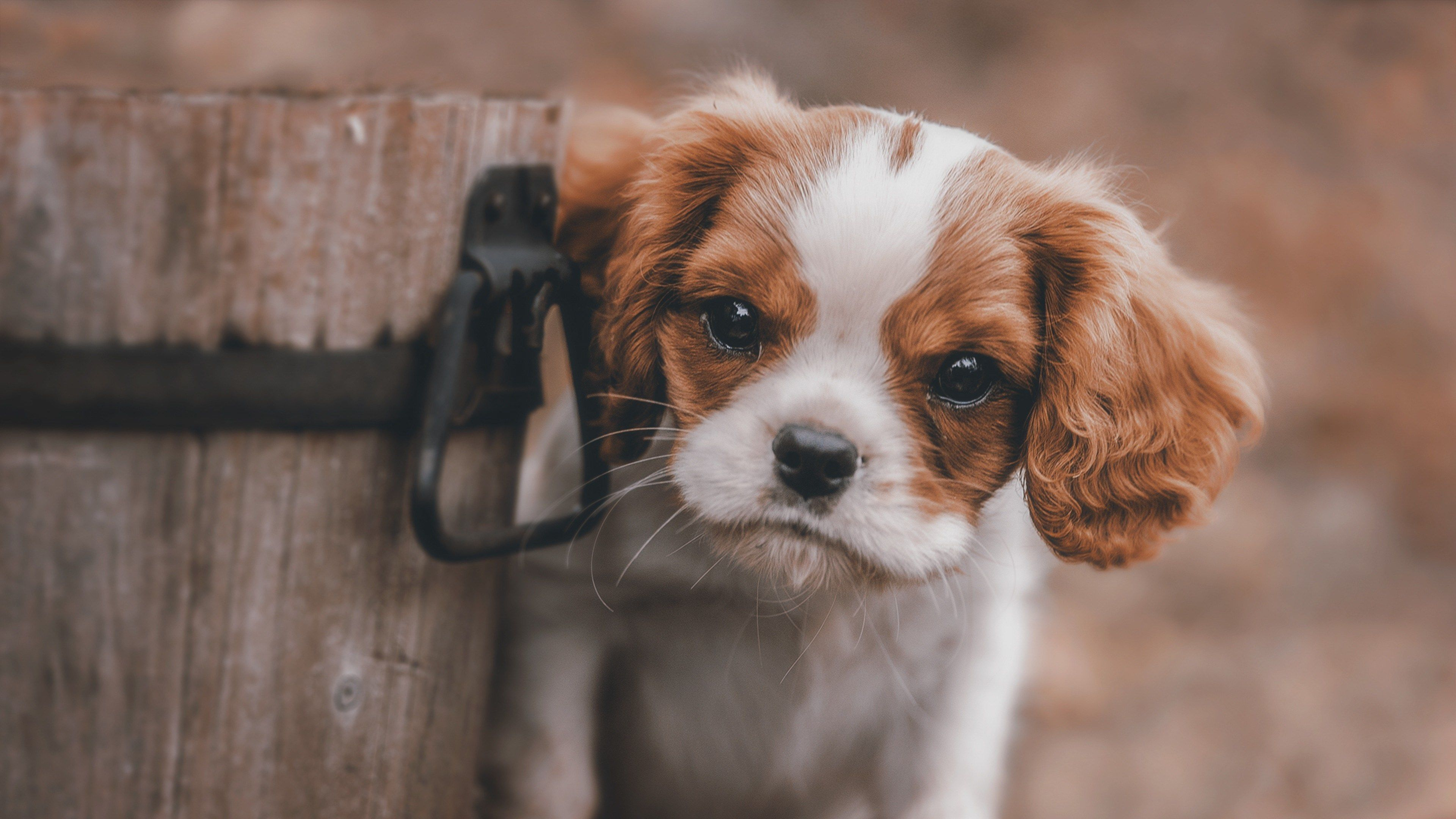 3840x2160 Animals 4k Best Hd Wallpaper Cute Puppies Puppies