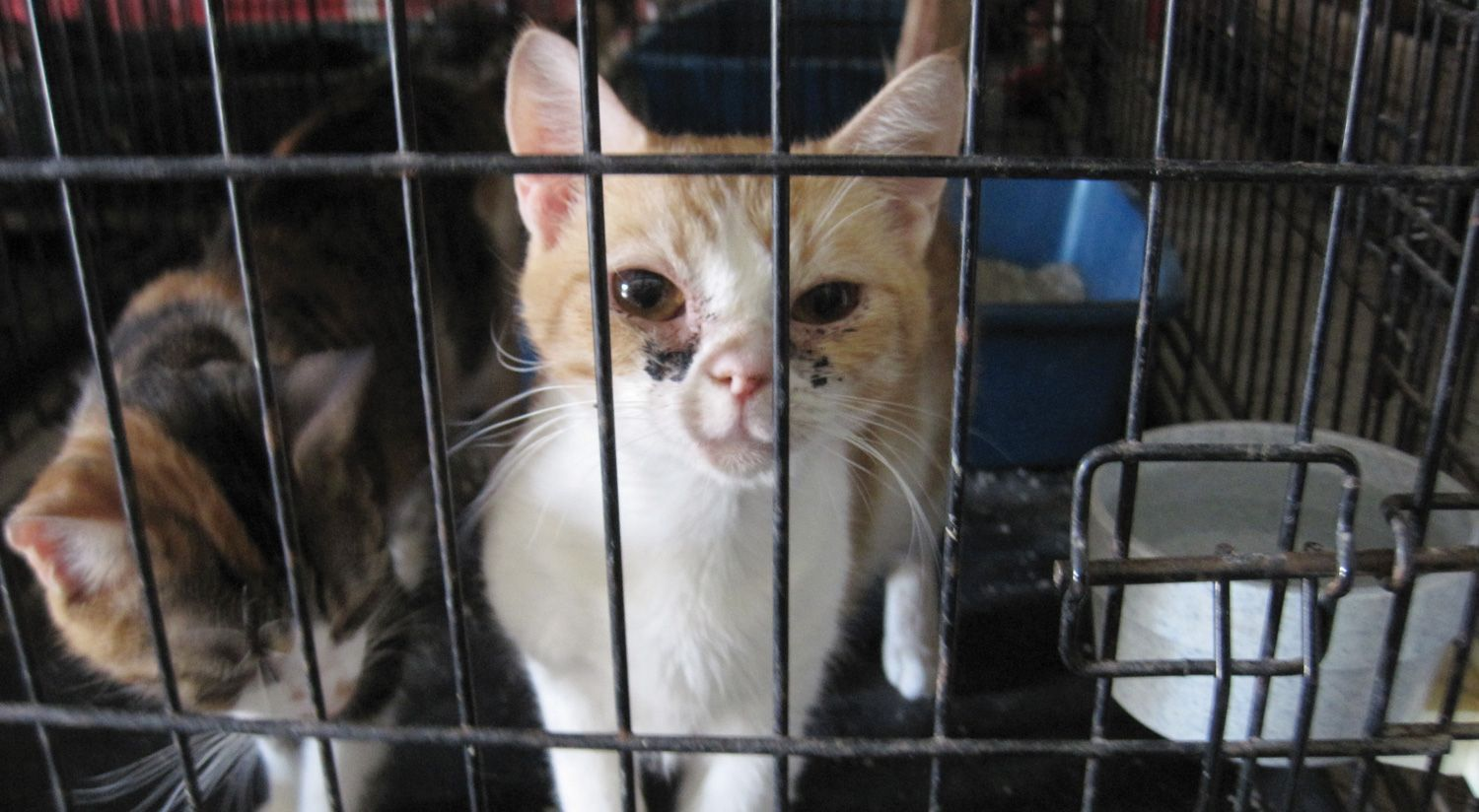 The Deadly Consequences Of No Kill Policies Features Peta Animal Shelter Cat Shelter Cat Insurance