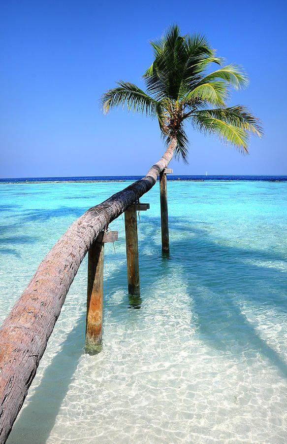 Arco baixo.  Tropical fotografia da palma sobre a lagoa por Jenny do arco-íris
