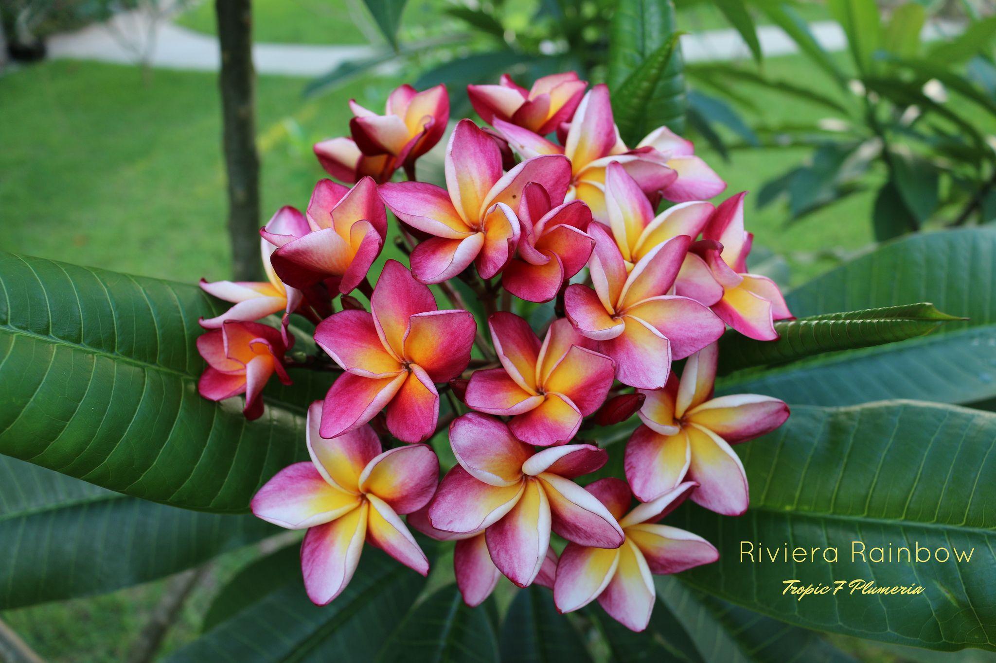 https://flic.kr/p/Jntmz2 | Naples Botanical Garden June 24th 2016 | A tour of…