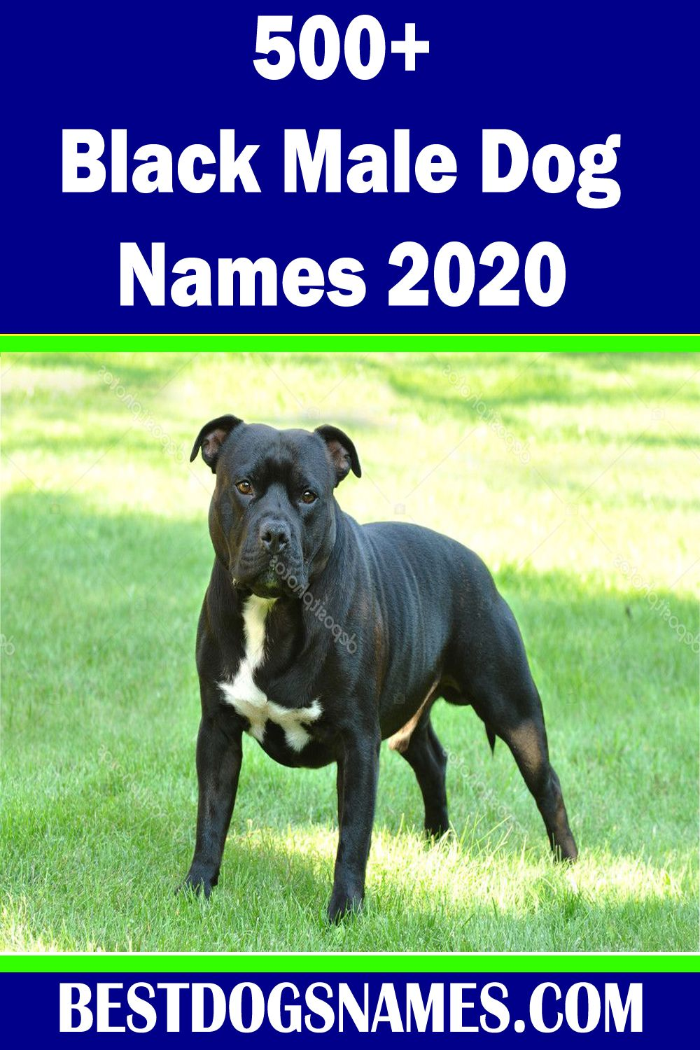 Black Dog Names Should Be As Special As Your Best Cute Black Dog