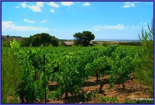 Les Corbières et la Clape, le Languedoc: Vignes et raisins des Corbières