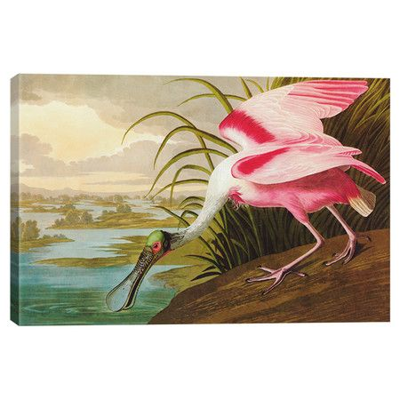 Roseate Spoonbill by Audubon Canvas Print at Joss and Main