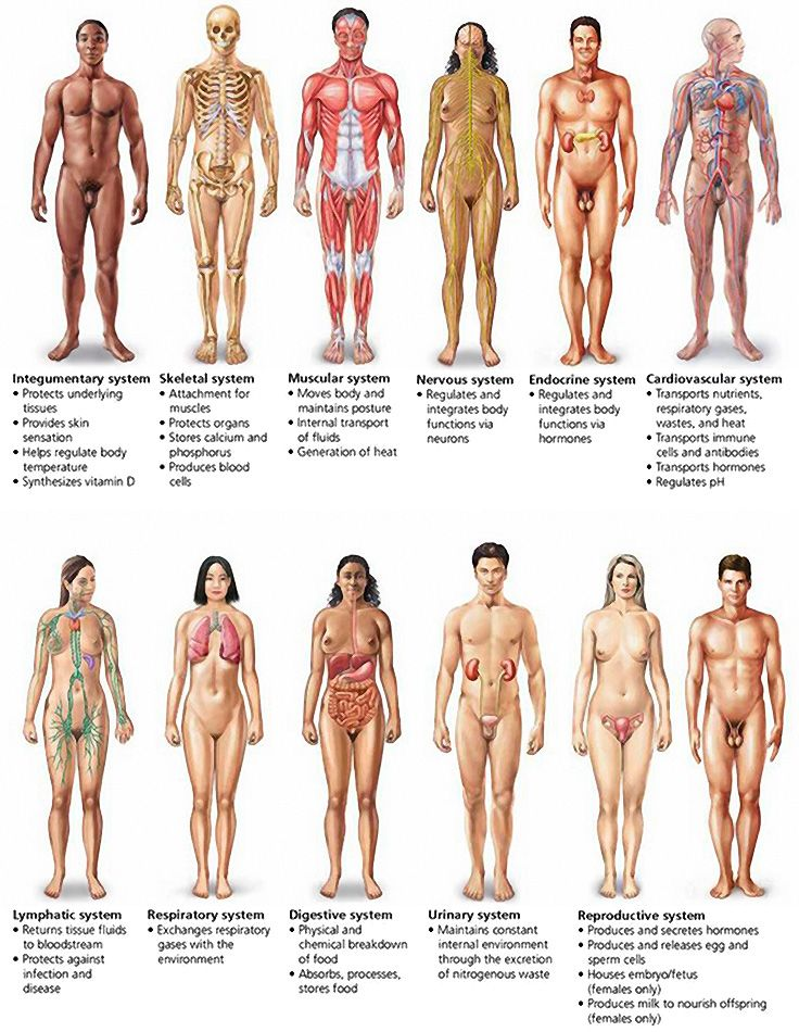 Major Organ Systems Of The Human Body Occupation For The Future