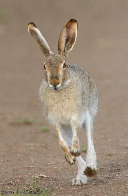 Jackrabbit #rabbithouses