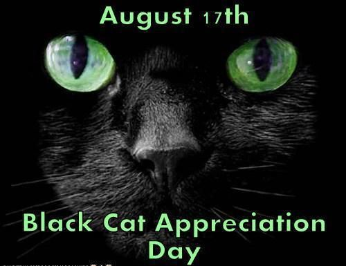 August 17th Black Cat Appreciation Day Blackcatsrule Black Cat Appreciation Day Black Cat Cats