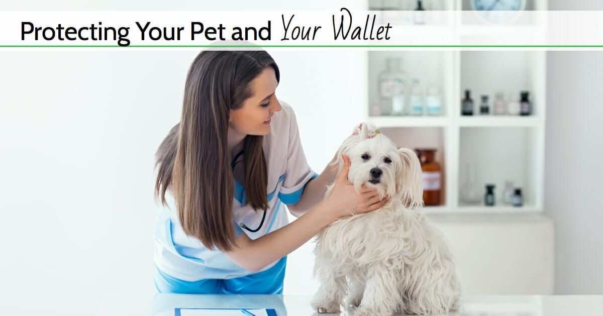 Top 3 Best Pet Insurance Companies For 2020 Comparison And Reviews Pet Insurance Best Pet Insurance Pet Insurance Reviews