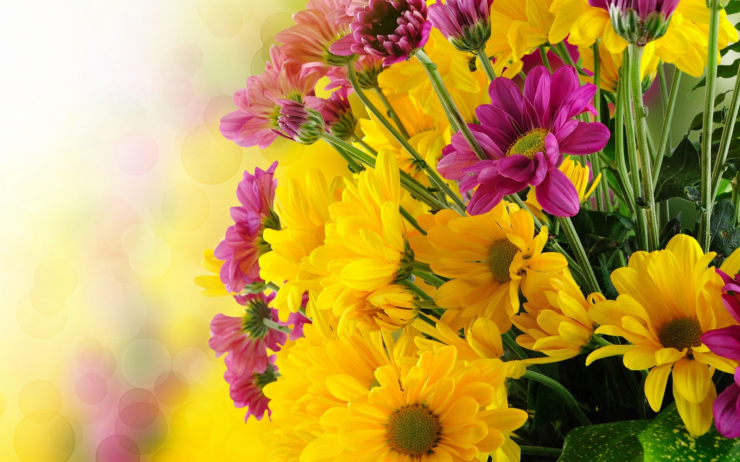 Yellow Flowers Images Find Best Latest For Your Pc Desktop Background Mobile