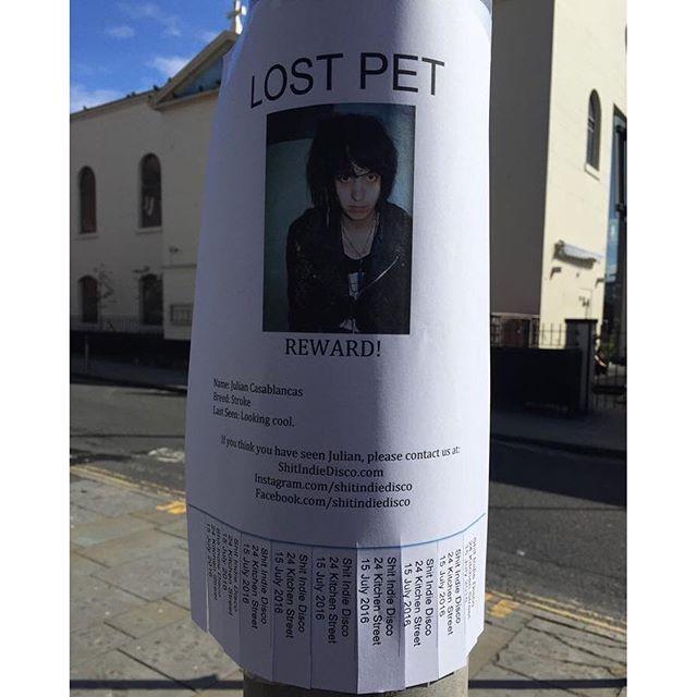 shitindiedisco/2016 09 09 065408/Julian Casablancas on our - lost pet poster